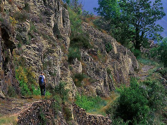 Baish Aran forests