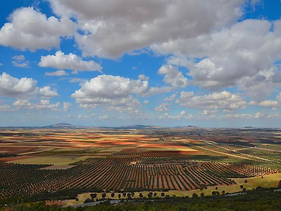Olive trees in La Mancha