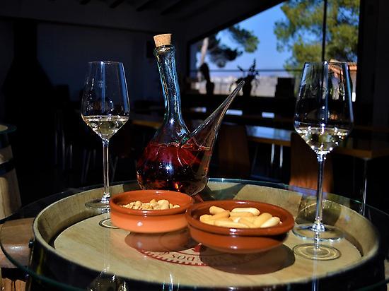 Wine tasting in a winery in Valencia