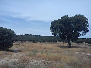 Forest in Madrid (Monte de El Pardo)
