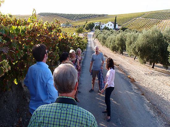 vinayards tour in Montilla. Bacus travel