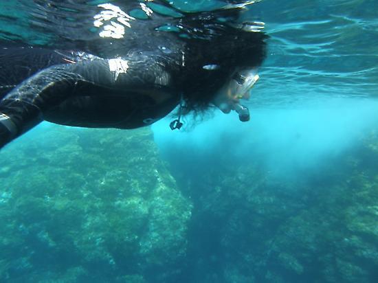 Discovering Mediterranean Posidonia
