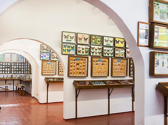Museum of Natural Sciences of Menorca