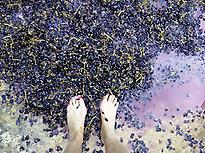 Wine stomping in ancient pressing pool!