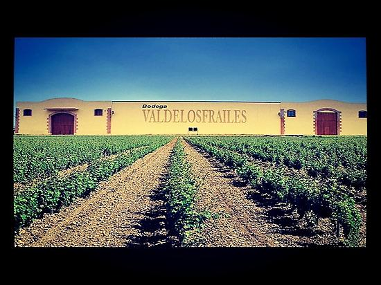 Pago de las Solanas vineyards