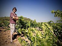 Altavins cellar vineyards
