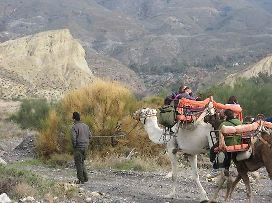Touristic route with camel