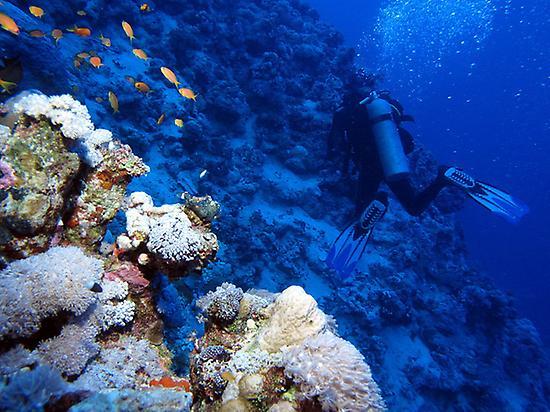 Scuba Diving immersion