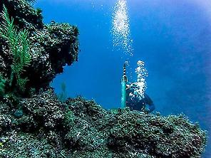 Scuba Diving for certificate divers