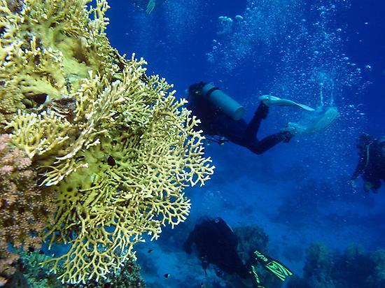 Diving in La Palma