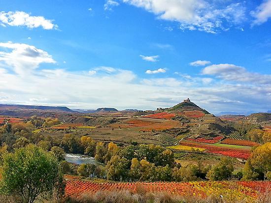 Fotografía paisajes de viñedos de Rioja