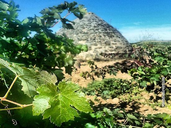 See a guardaviñas between vineyards