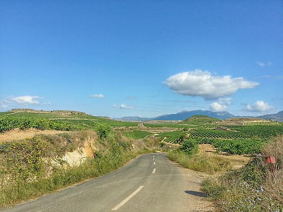Road trip between Rioja vineyards