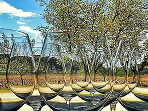 Wine Tastings at differents wineries