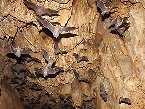 Bats cave.