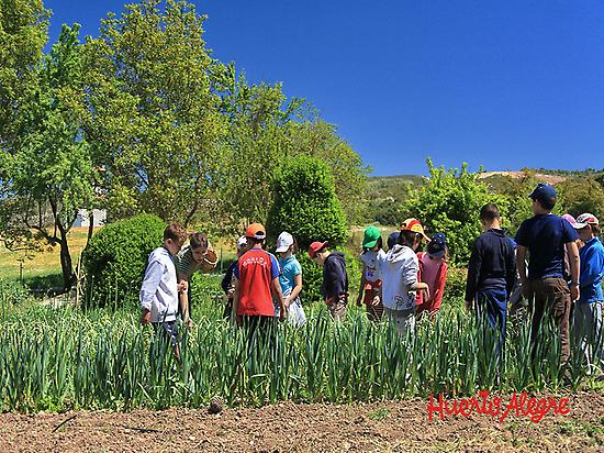 Cultivando la huerta ecológica