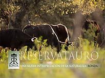 Vacas bravas viviendo en libertad
