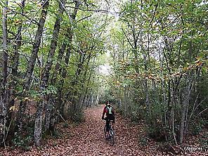 chesnut forest
