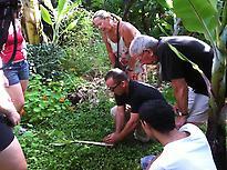 We observe plant