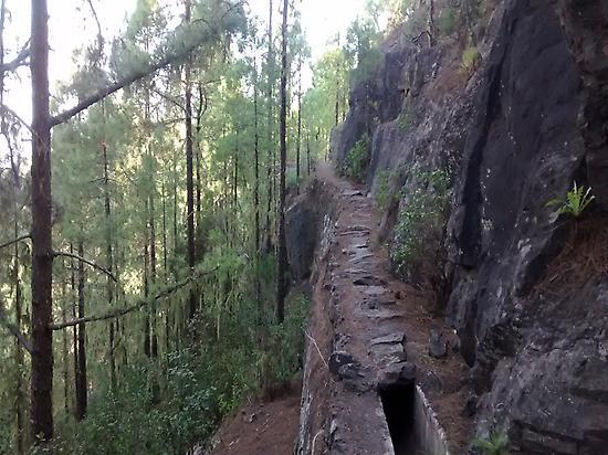 Forêt de Tamadaba