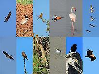 100+ Birds Malaga Tour