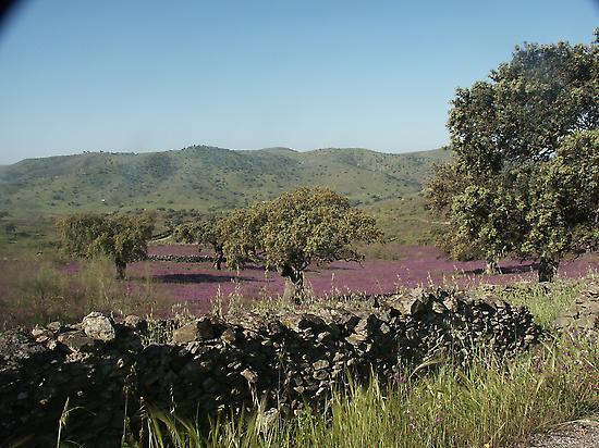 Dehesa of holm oaks and cork oaks.