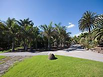 palm area