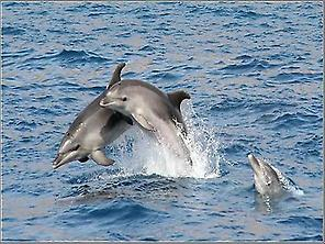 Cetaceans