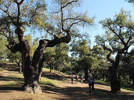 Walking in Aracena