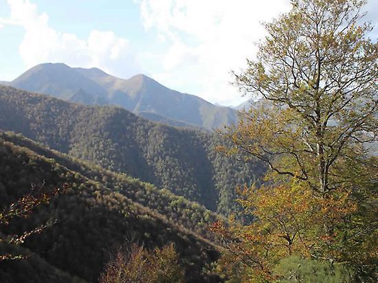 """""""El Otoño de las Hayas"""". Autumn beech"""