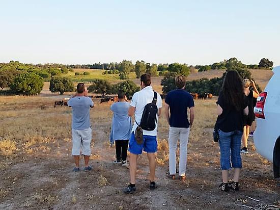 Ranch of Toros Bravos