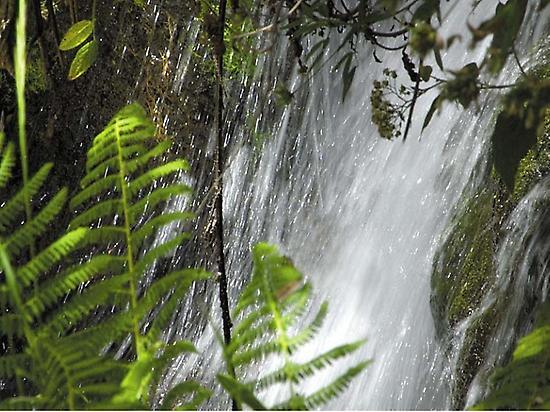 Springs of Marcos & Cordero