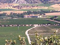 Landcape in ribera del Duero