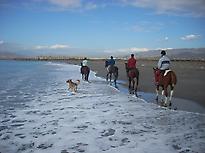Horses in the Beach
