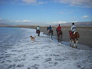 Horses in the Beach