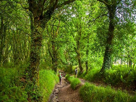 Wood close to Sarria