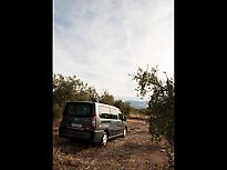 Our Van surrounded by olives