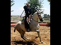 Payaso a legend in the farm