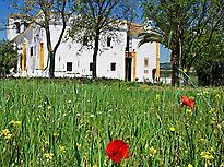 Hacienda el Santiscal - Vino