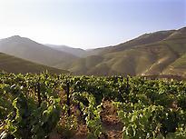 Hospedería Señorío de las Briñas -Wine