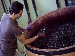 Hotel Villa Lehmi - Best wine