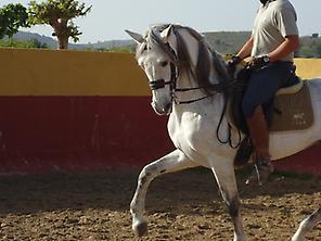 Ride Horse