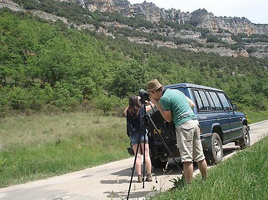 Looking for rock birds