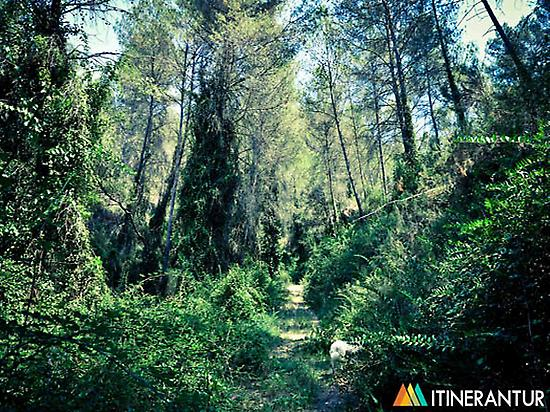 Forest in Cirat.