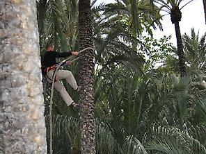 Traditional man palm tree