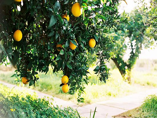 Rodeados de naranjos.