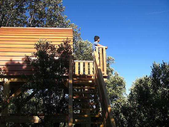 Cabin on the treetops.