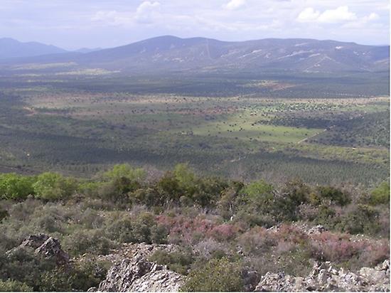 MEDITERRANEAN FOREST OF TOLEDO HILLS