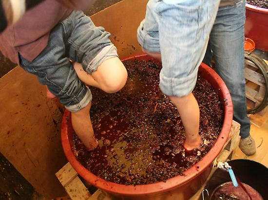 Pisado de la uva