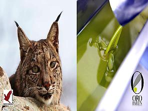 Iberian lynx and Olive Oil